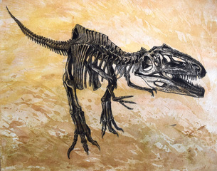 Giganotosaurus dinosaur skeleton.のイラスト素材 [FYI02107993]