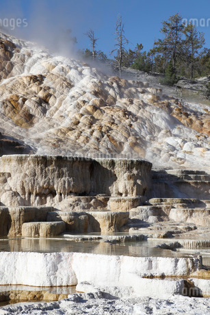 Palette spring and travertine sinter terraces. Mammoth Hot Springs, Yellowstone National Park.の写真素材 [FYI02108111]