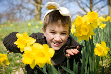 A young boy peering through daffodils wearing bunny earsの写真素材 [FYI02108187]