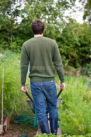 A man pushing a wheelbarrow on an allotment, rear viewの写真素材 [FYI02108728]