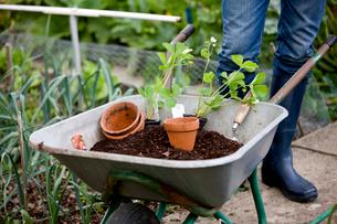 A gardener standing next to a wheelbarrow containing compostの写真素材 [FYI02108894]