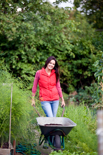 A young woman pushing a wheelbarrow on an allotmentの写真素材 [FYI02109767]