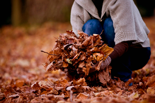 A woman gathering leaves in autumn time, close upの写真素材 [FYI02109849]