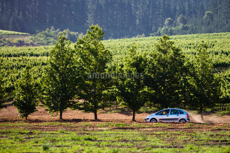 Family car, in mid-distance, driving along country road, passing forest and fields, side viewの写真素材 [FYI02111397]