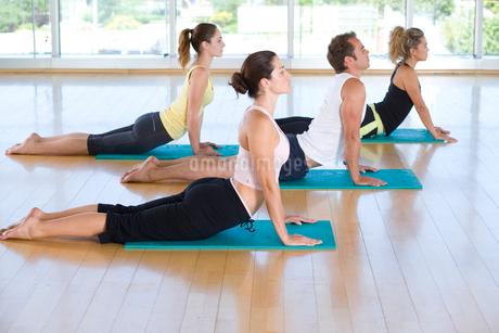 Yoga students in cobra position in class in studio, side viewの写真素材 [FYI02111611]