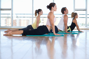 Yoga students in cobra position in class in studio, side viewの写真素材 [FYI02111916]