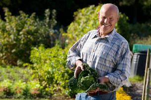 Man holding cabbage in gardenの写真素材 [FYI02112037]