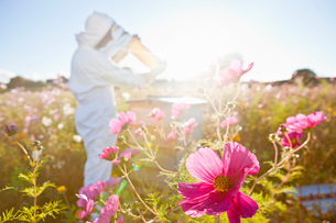 Beekeeper, holding beehive frame of honey up to the sun, in field full of flowersの写真素材 [FYI02113711]