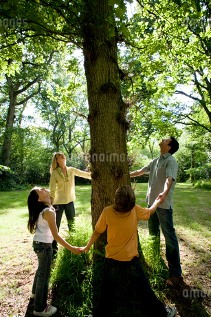 Family of four holding hands around base of three in green countryside looking up into branches,の写真素材 [FYI02114148]