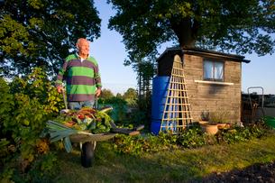 Man picking vegetables in gardenの写真素材 [FYI02114535]