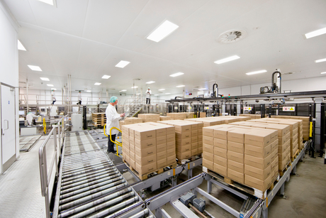 Worker behind boxes at food packaging production lineの写真素材 [FYI02115389]