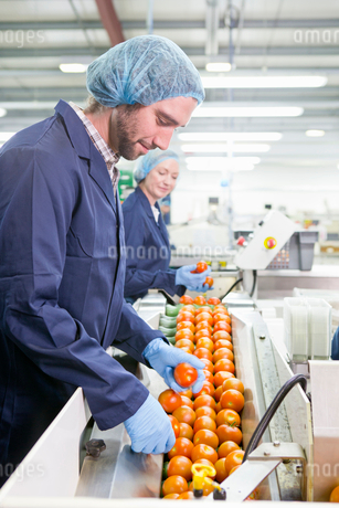 Quality control worker examining tomatoes on production line in food processing plantの写真素材 [FYI02115553]