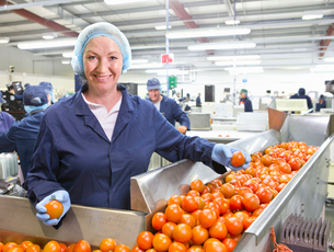 Portrait confident quality control worker sorting ripe red tomatoes on production line in food proceの写真素材 [FYI02115562]