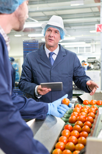 Quality control workers with digital tablet talking and sorting ripe red tomatoes on production lineの写真素材 [FYI02115581]