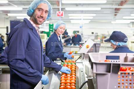 Portrait smiling quality control worker inspecting tomatoes on production line in food processing plの写真素材 [FYI02115607]