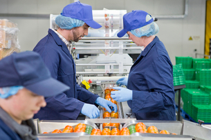 Quality control workers inspecting tomatoes on production line in food processing plantの写真素材 [FYI02115611]