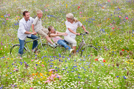 Family riding bicycles in wildflower fieldの写真素材 [FYI02115693]