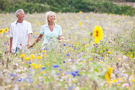 Smiling senior couple holding hands and walking in field of wildflowersの写真素材 [FYI02115952]