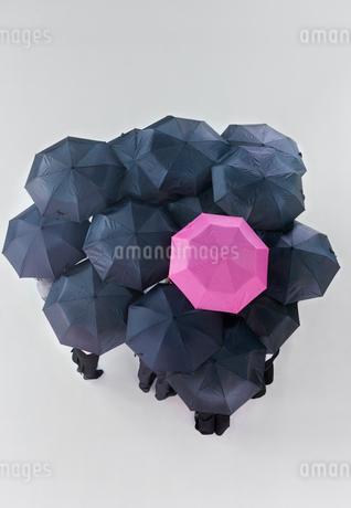 Pink umbrella among group of black umbrellasの写真素材 [FYI02116090]