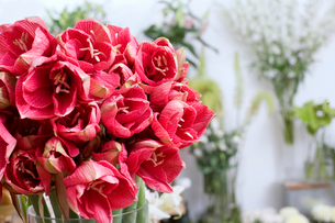 Bunch of red flowers in vase in flower shop, close-up, focus on foregroundの写真素材 [FYI02116103]