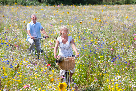 Smiling senior couple riding bicycles through field of wildflowersの写真素材 [FYI02116145]