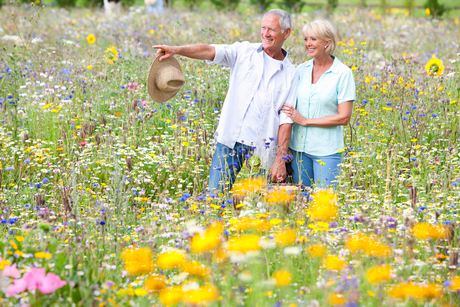Smiling senior couple looking at blossoms in field of wildflowersの写真素材 [FYI02116405]