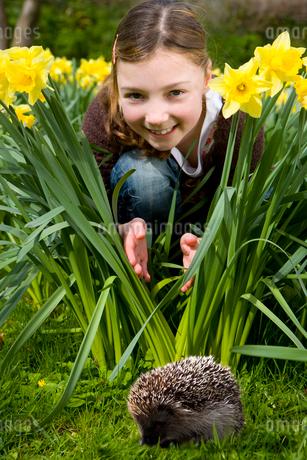Young girl watching a hedgehogの写真素材 [FYI02116504]