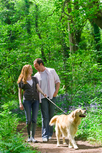 Couple and dog walking in forest among bluebell flowersの写真素材 [FYI02116732]