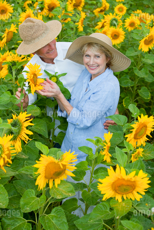Portrait of smiling couple among sunflowers in sunny meadowの写真素材 [FYI02116835]