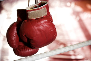 Close up of boxing gloves on the ropes of a boxing ring.の写真素材 [FYI02117908]