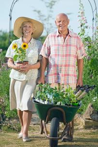 Senior Couple Working In Beautiful Cottage Flower Gardenの写真素材 [FYI02118020]