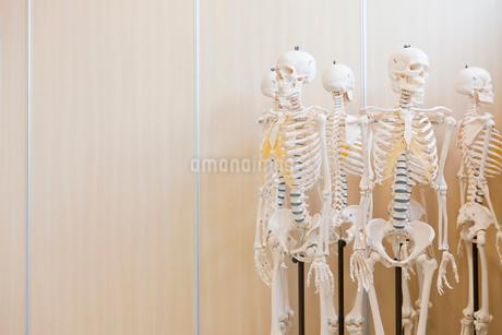 Skeleton modelsの写真素材 [FYI02118032]
