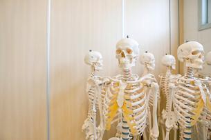 Skeleton modelsの写真素材 [FYI02118053]