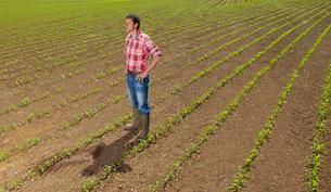 Farmer with hands on hips in field of corn seedlingsの写真素材 [FYI02118112]