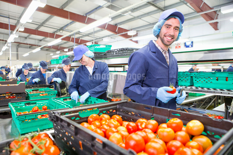 Portrait smiling worker packing ripe red tomatoes on production line in food processing plantの写真素材 [FYI02118295]