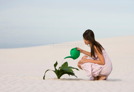 A woman watering a plant in the sandの写真素材 [FYI02118444]