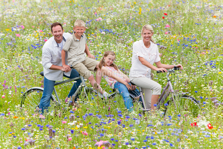 Portrait of smiling family riding bicycles in wildflower fieldの写真素材 [FYI02118777]