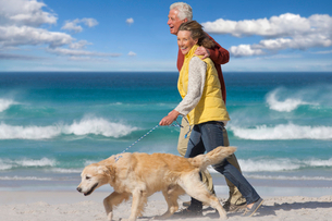 Senior couple with dog walking on sunny beachの写真素材 [FYI02118951]