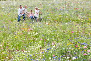 Family riding bicycles in wildflower fieldの写真素材 [FYI02119099]