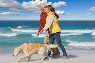 Senior couple with dog walking on sunny beachの写真素材 [FYI02119194]