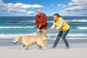 Senior couple with dog walking on sunny beachの写真素材 [FYI02119580]