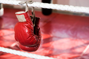 Close up of boxing gloves on the ropes of a boxing ring.の写真素材 [FYI02119831]