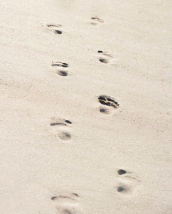 Footsteps in sandの写真素材 [FYI02119864]