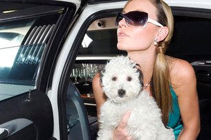 A woman in a stretch limousine with her pet dogの写真素材 [FYI02120069]