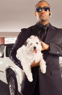 A chauffer holding his boss's pet dogの写真素材 [FYI02120115]