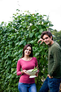 A young couple standing on an allotment, woman holding a colander of runner beansの写真素材 [FYI02120407]