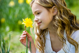 A young girl holding a daffodilの写真素材 [FYI02120501]