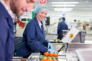 Quality control workers inspecting tomatoes on production line in food processing plantの写真素材 [FYI02120817]