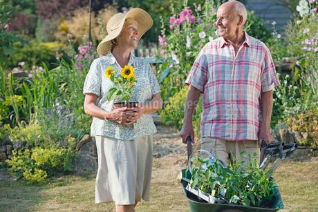 Senior Couple Working In Beautiful Cottage Flower Gardenの写真素材 [FYI02121086]