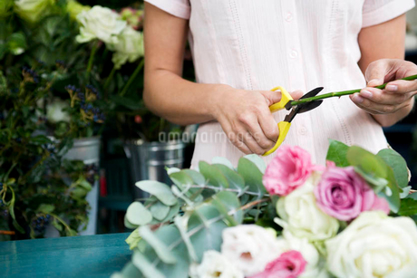 Woman's hands tying together a bouquet of pink and white rosesの写真素材 [FYI02121814]